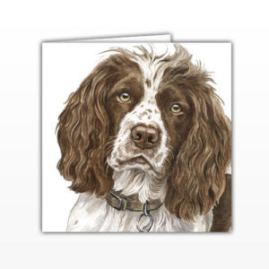 Springer Spaniel Greetings Card