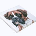 Boxer Canvas