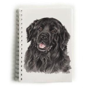 Newfoundland Notebook