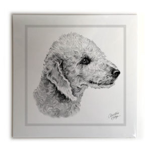 Bedlington Terrier Dog Picture / Print