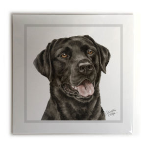 Black Labrador Dog Picture / Print