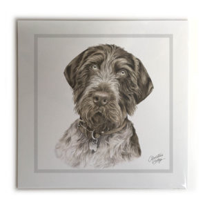 German Wire-haired Pointer Picture / Print