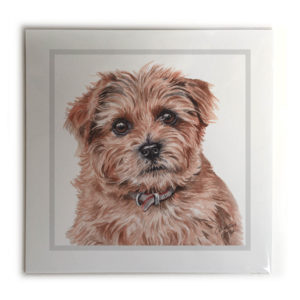 Norfolk Terrier Dog Picture / Print
