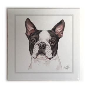 Boston Terrier Picture / Print