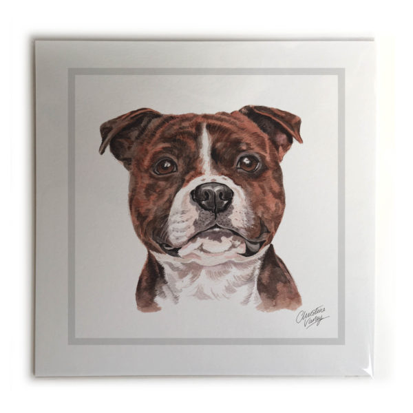 Staffordshire Bull Terrier Dog Picture / Print