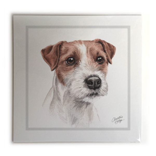 Parson Jack Russell Dog Picture / Print
