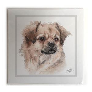 Tibetan Spaniel Dog Picture / Print