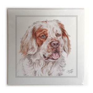 Clumber Spaniel Picture / Print