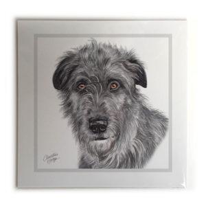 Irish Wolfhound Picture / Print