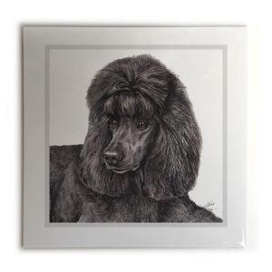 Black Poodle Dog Picture / Print