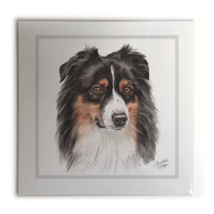 Australian Shepherd Dog Picture / Print