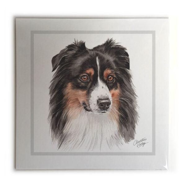 Australian Shepherd Dog Picture / Print