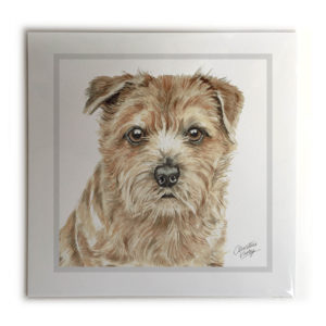 Norfolk Terrier Picture / Print