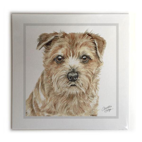 Norfolk Terrier Dog Picture / Print