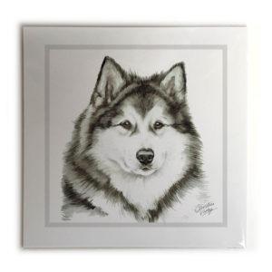 Alaskan Malamute Dog Picture / Print
