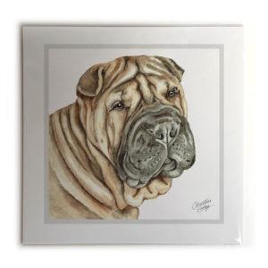 Shar Pei Dog Picture / Print