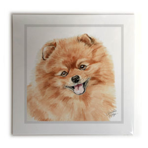 Pomeranian Dog Picture / Print