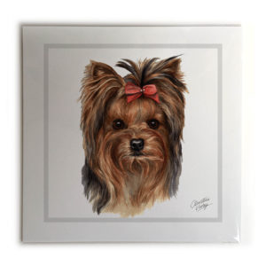 Yorkshire Terrier Picture / Print