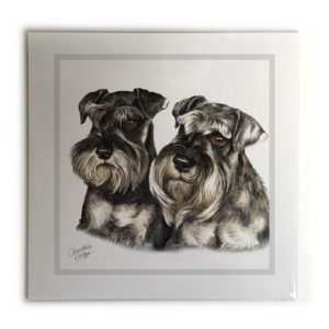 Miniature Schnauzer Pair Dog Picture / Print