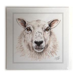 Sheep Animal Picture / Print