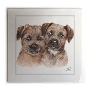 Border Terrier Puppies Dog Picture / Print